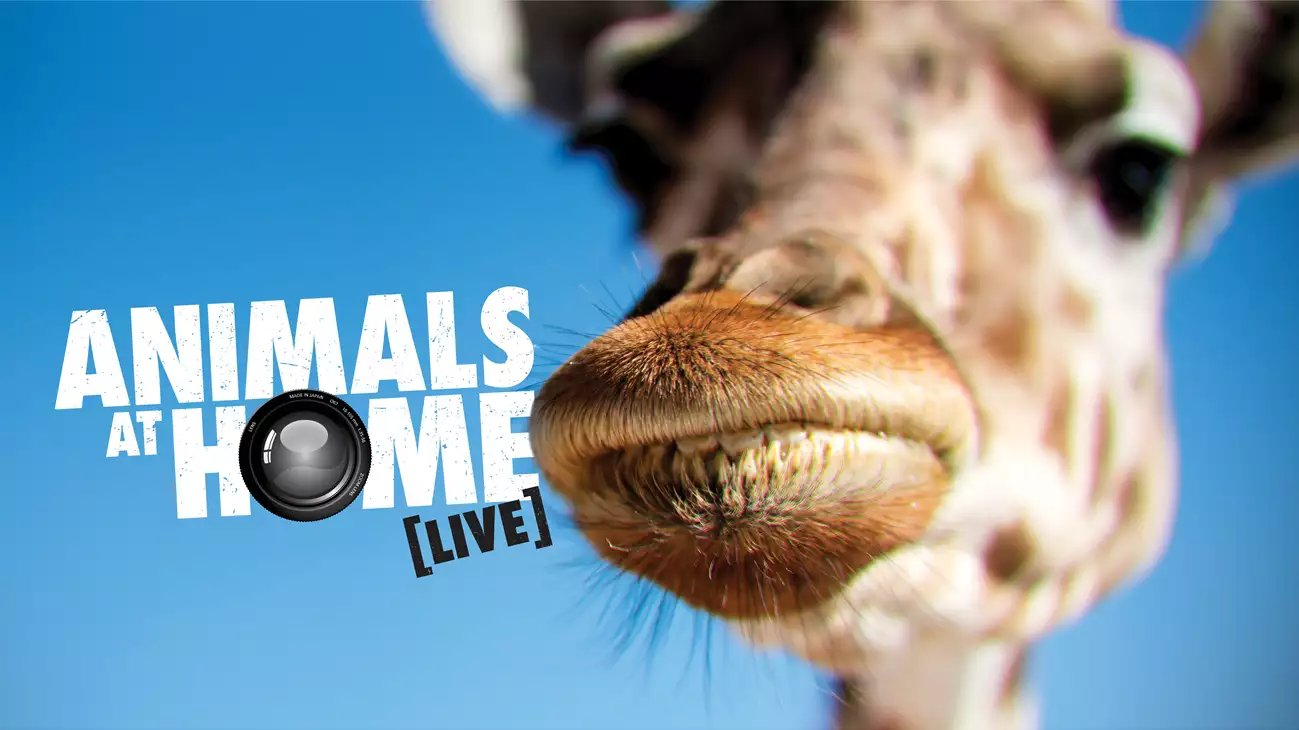 Animals at Home by Zoos Victoria